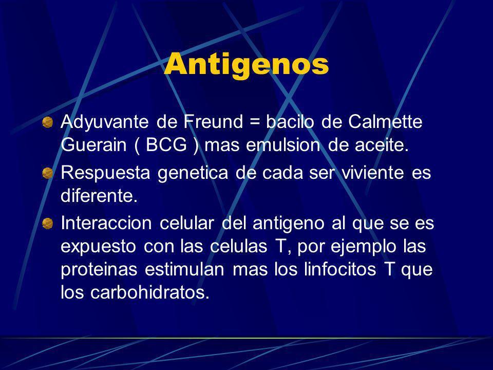Antigenos Adyuvante de Freund = bacilo de Calmette Guerain ( BCG ) mas emulsion de aceite. Respuesta genetica de cada ser viviente es diferente. Inter