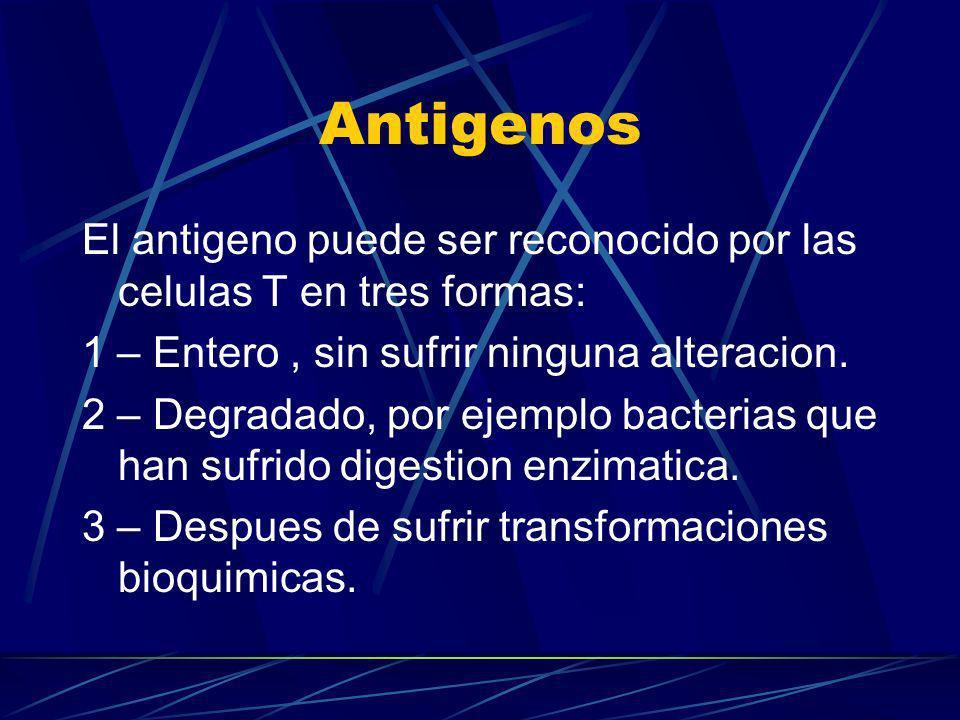Antigenos El antigeno puede ser reconocido por las celulas T en tres formas: 1 – Entero, sin sufrir ninguna alteracion. 2 – Degradado, por ejemplo bac