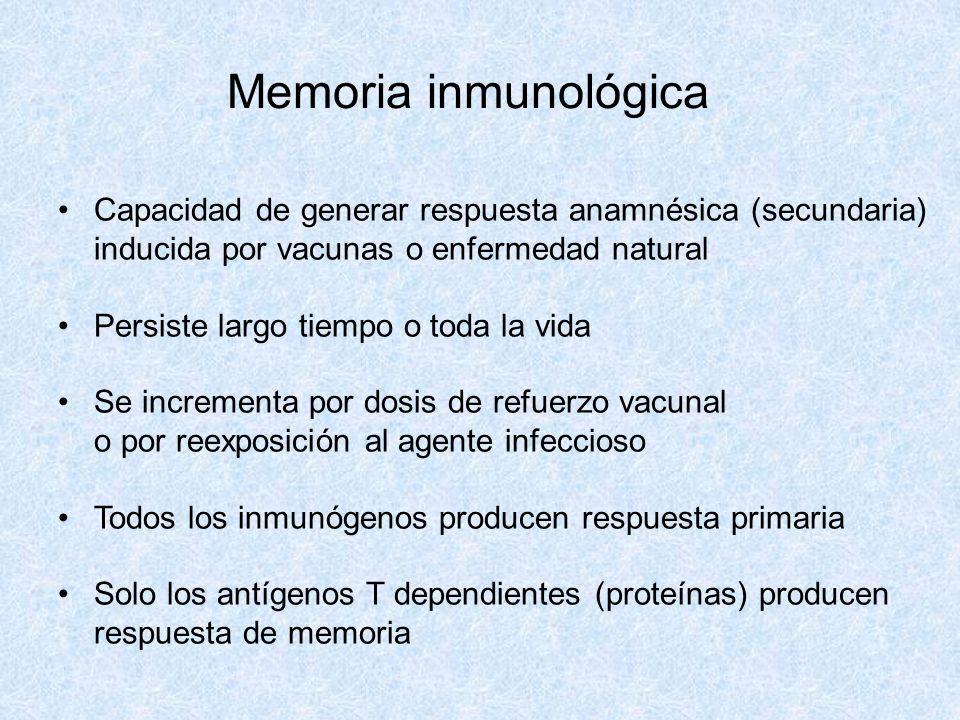 Memoria inmunológica Capacidad de generar respuesta anamnésica (secundaria) inducida por vacunas o enfermedad natural Persiste largo tiempo o toda la