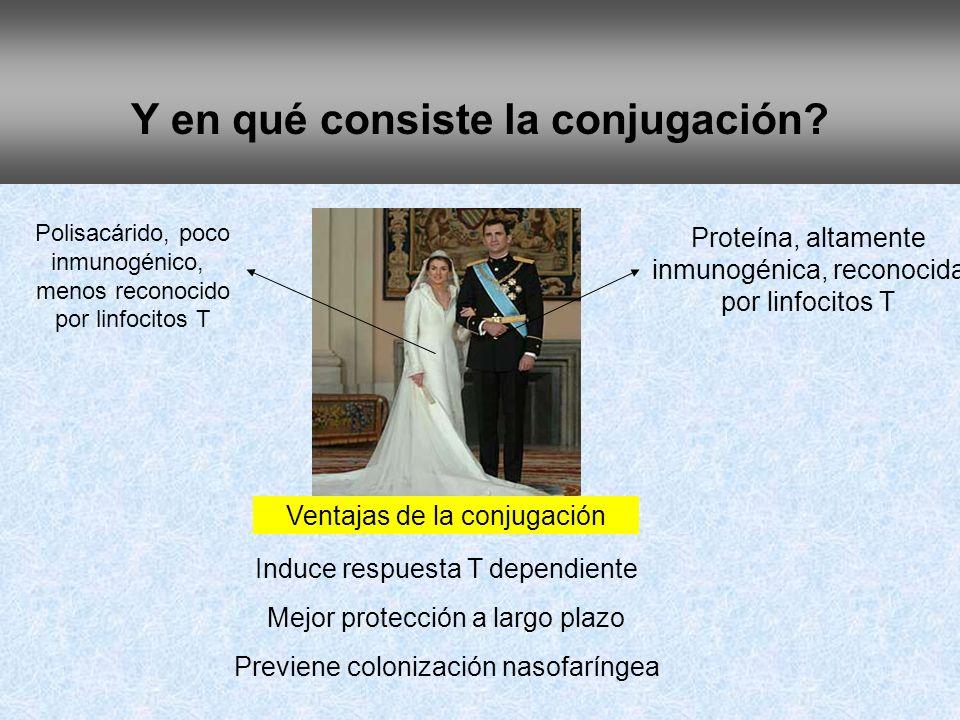 Y en qué consiste la conjugación? Polisacárido, poco inmunogénico, menos reconocido por linfocitos T Proteína, altamente inmunogénica, reconocida por