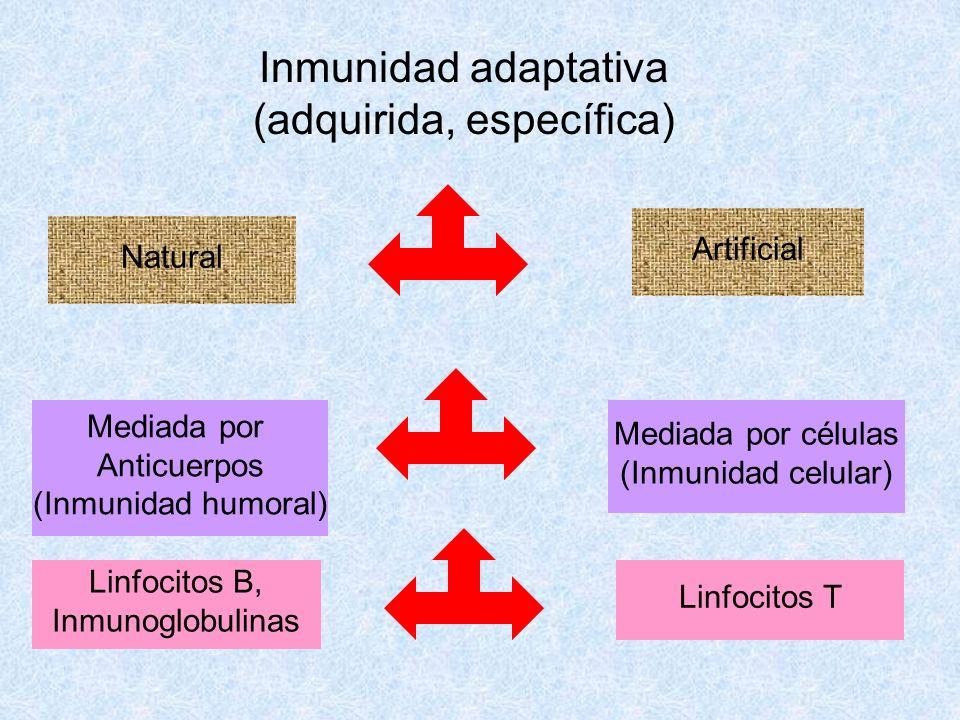 Inmunidad adaptativa (adquirida, específica) Natural Artificial Mediada por Anticuerpos (Inmunidad humoral) Mediada por células (Inmunidad celular) Li