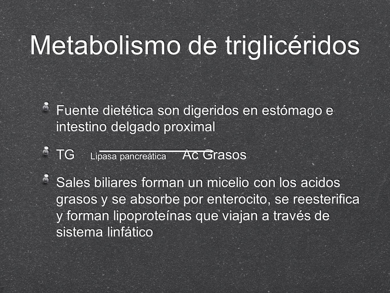 Metabolismo de triglicéridos Fuente dietética son digeridos en estómago e intestino delgado proximal TG Lipasa pancreática Ac Grasos Sales biliares fo