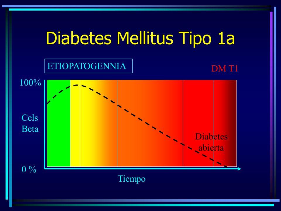 Diabetes Mellitus Tipo 1a ETIOPATOGENNIA 0 % 100% DM T1 Cels Beta Tiempo Diabetes abierta