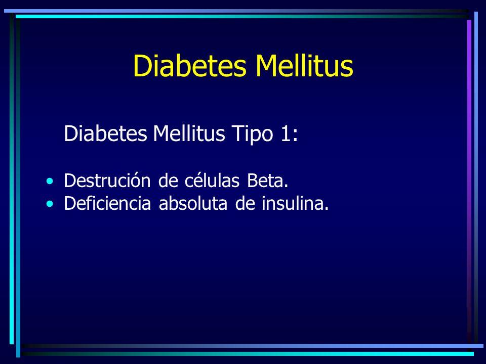 Diabetes Mellitus Diabetes Mellitus Tipo 1: Destrución de células Beta.