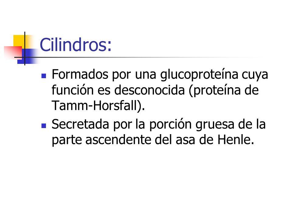 Cilindros: Formados por una glucoproteína cuya función es desconocida (proteína de Tamm-Horsfall). Secretada por la porción gruesa de la parte ascende