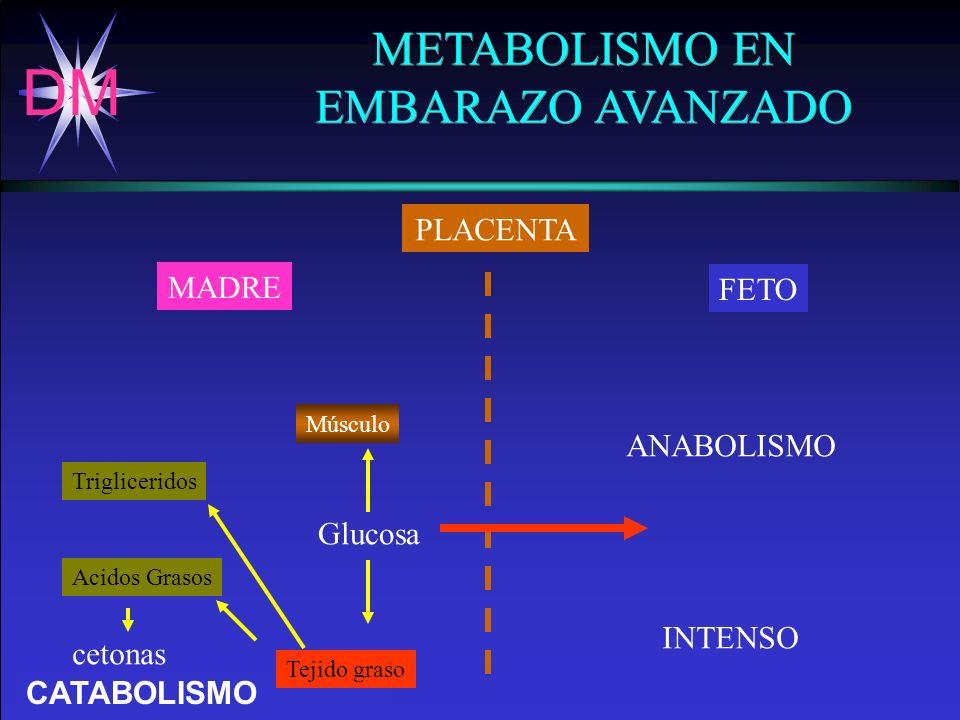 DM Dr. Arturo Esquivel Grillo. - H.C.G. CATABOLISMO METABOLISMO EN EMBARAZO AVANZADO METABOLISMO EN EMBARAZO AVANZADO PLACENTA MADRE FETO ANABOLISMO I