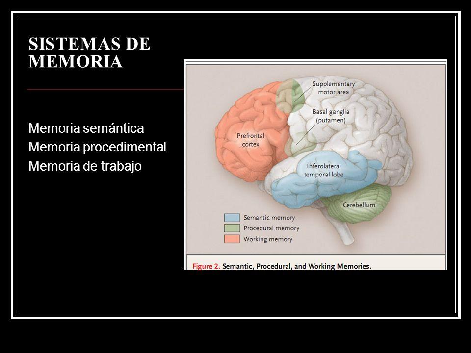 SISTEMAS DE MEMORIA Memoria semántica Memoria procedimental Memoria de trabajo