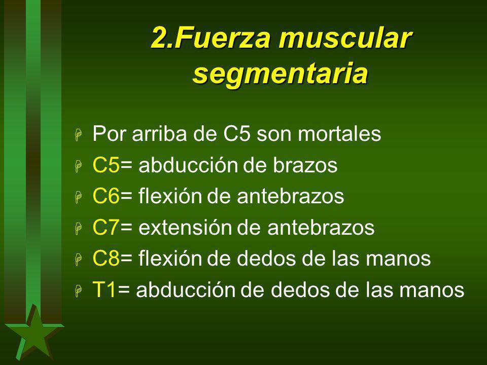 2.Fuerza muscular segmentaria H Por arriba de C5 son mortales H C5= abducción de brazos H C6= flexión de antebrazos H C7= extensión de antebrazos H C8