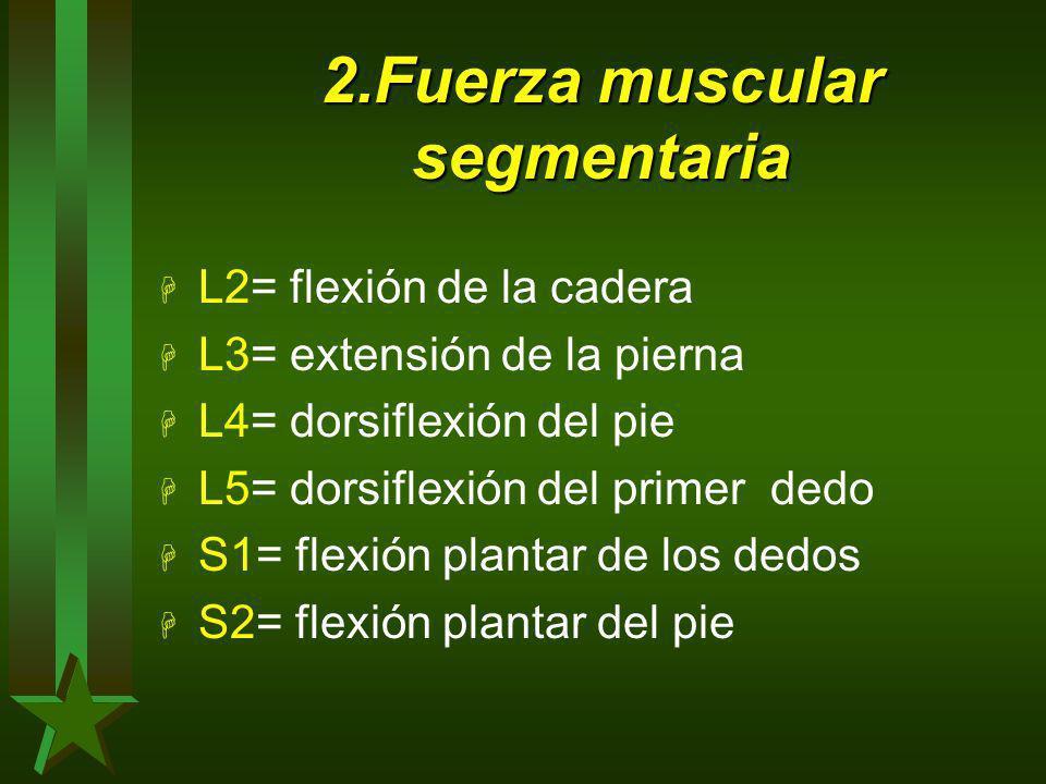 2.Fuerza muscular segmentaria H L2= flexión de la cadera H L3= extensión de la pierna H L4= dorsiflexión del pie H L5= dorsiflexión del primer dedo H