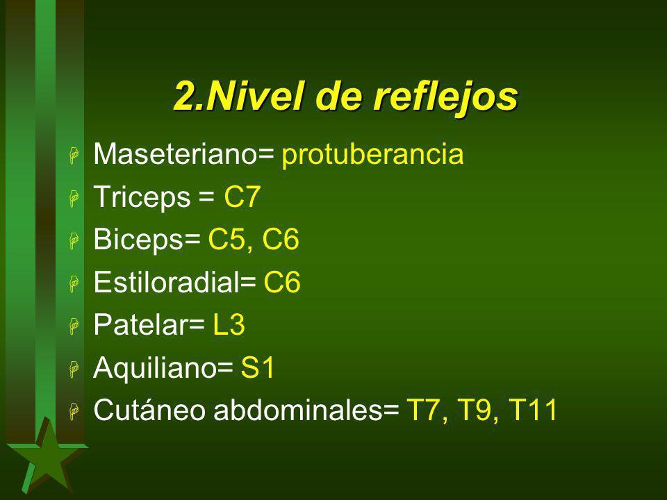 2.Nivel de reflejos H Maseteriano= protuberancia H Triceps = C7 H Biceps= C5, C6 H Estiloradial= C6 H Patelar= L3 H Aquiliano= S1 H Cutáneo abdominale