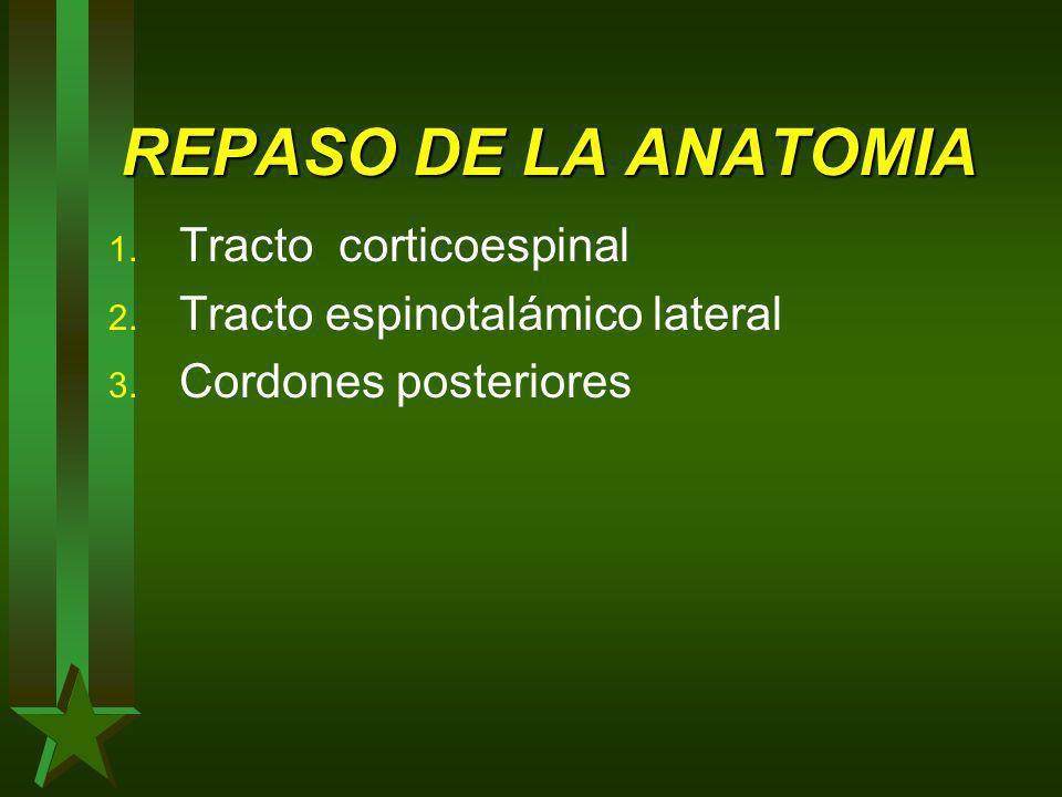 REPASO DE LA ANATOMIA 1. Tracto corticoespinal 2. Tracto espinotalámico lateral 3. Cordones posteriores