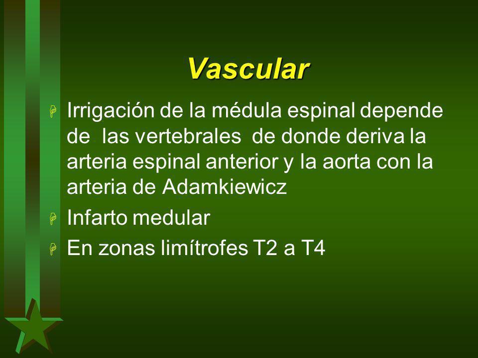 Vascular H Irrigación de la médula espinal depende de las vertebrales de donde deriva la arteria espinal anterior y la aorta con la arteria de Adamkie