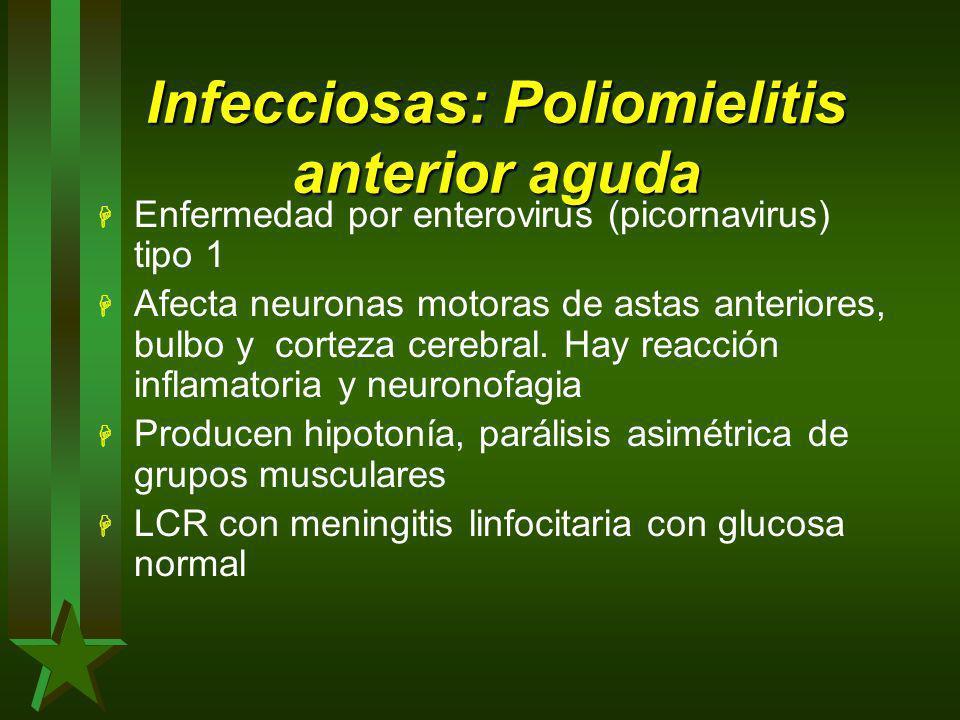 Infecciosas: Poliomielitis anterior aguda H Enfermedad por enterovirus (picornavirus) tipo 1 H Afecta neuronas motoras de astas anteriores, bulbo y co