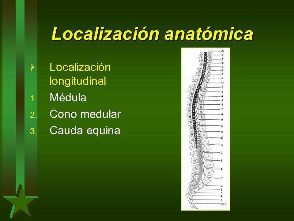 Localización anatómica H Localización longitudinal 1. Médula 2. Cono medular 3. Cauda equina