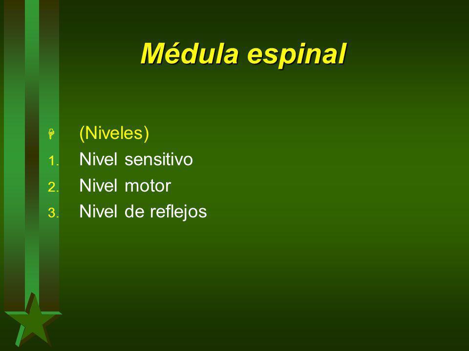 Médula espinal H (Niveles) 1. Nivel sensitivo 2. Nivel motor 3. Nivel de reflejos