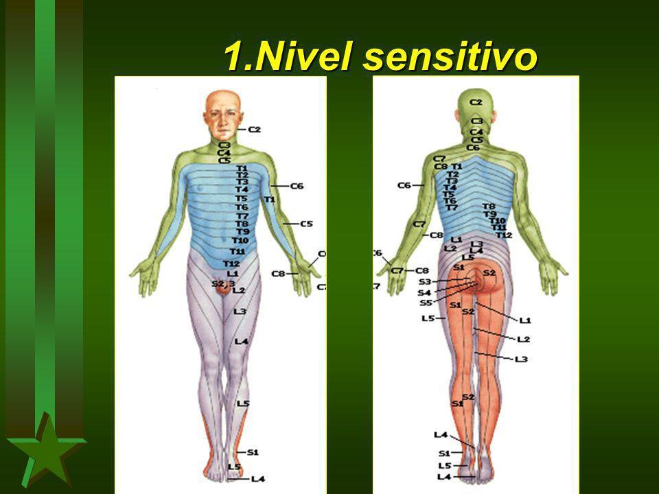 1.Nivel sensitivo