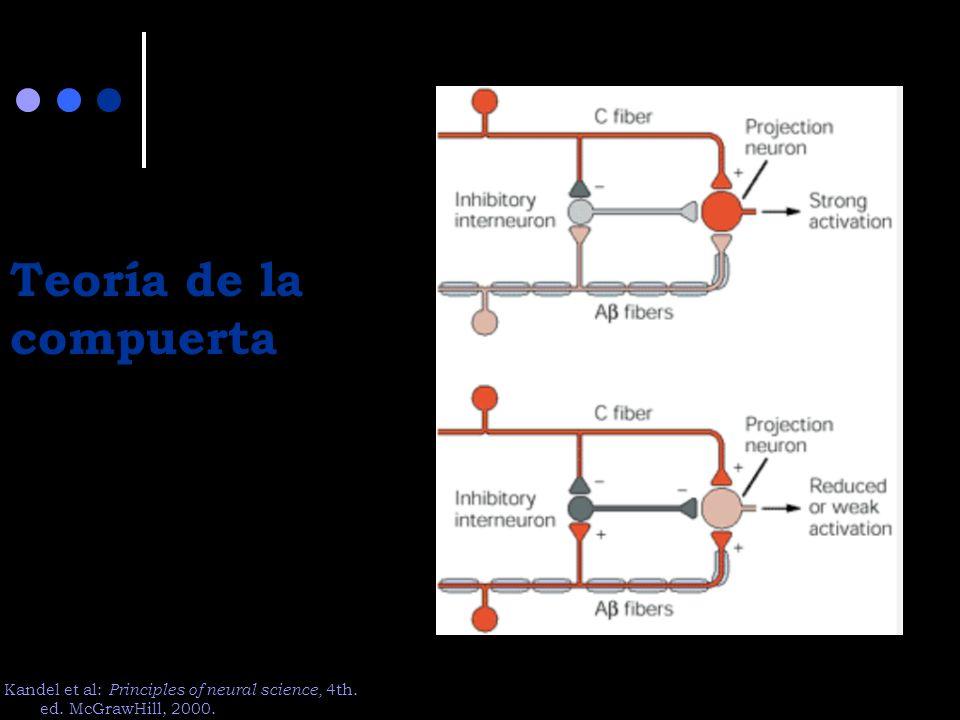 Teoría de la compuerta Kandel et al: Principles of neural science, 4th. ed. McGrawHill, 2000.