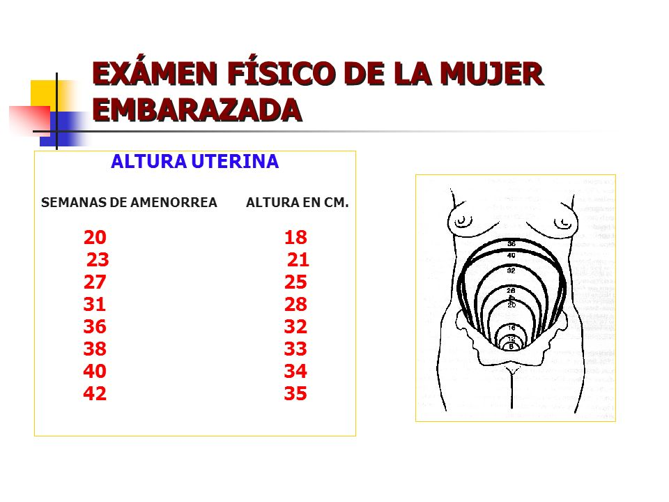 EXÁMEN FÍSICO DE LA MUJER EMBARAZADA ALTURA UTERINA SEMANAS DE AMENORREA ALTURA EN CM. 2018 23 21 2725 3128 3632 3833 4034 4235