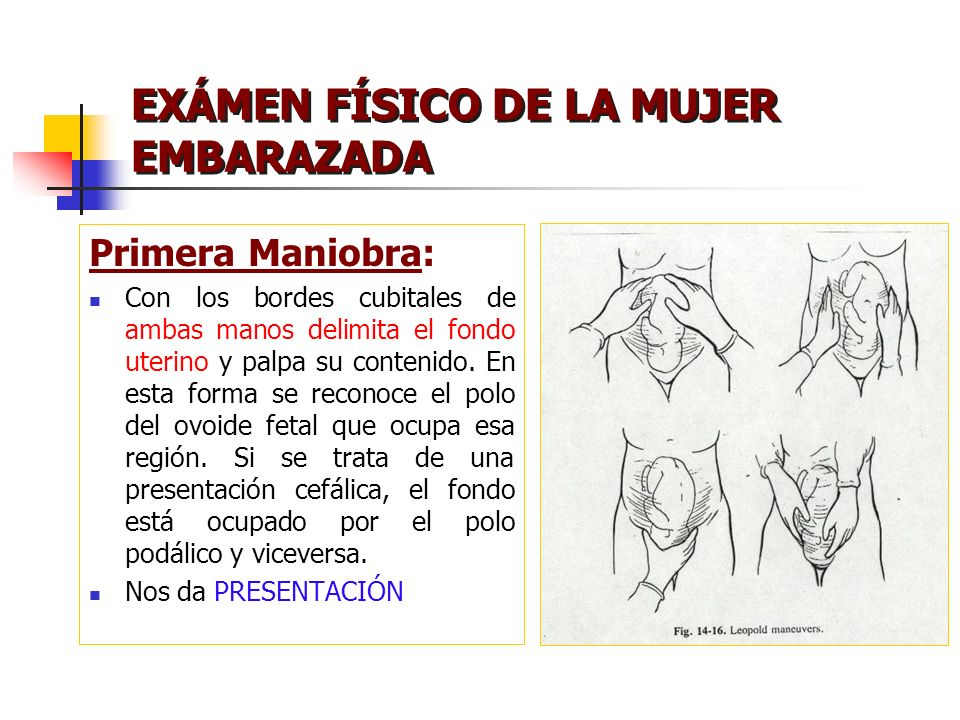 EXÁMEN FÍSICO DE LA MUJER EMBARAZADA Primera Maniobra: Con los bordes cubitales de ambas manos delimita el fondo uterino y palpa su contenido. En esta