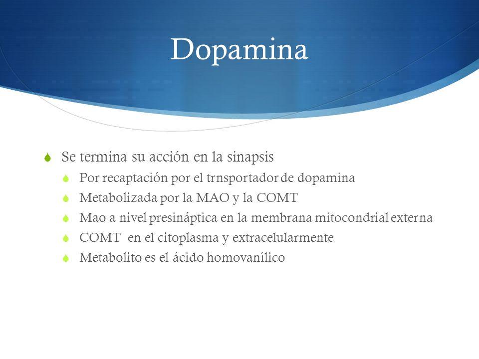 Dopamina Se termina su acción en la sinapsis Por recaptación por el trnsportador de dopamina Metabolizada por la MAO y la COMT Mao a nivel presináptic
