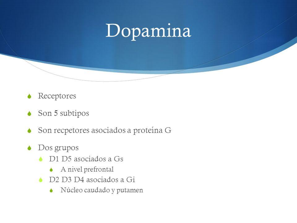 Dopamina Receptores Son 5 subtipos Son recpetores asociados a proteína G Dos grupos D1 D5 asociados a Gs A nivel prefrontal D2 D3 D4 asociados a Gi Nú