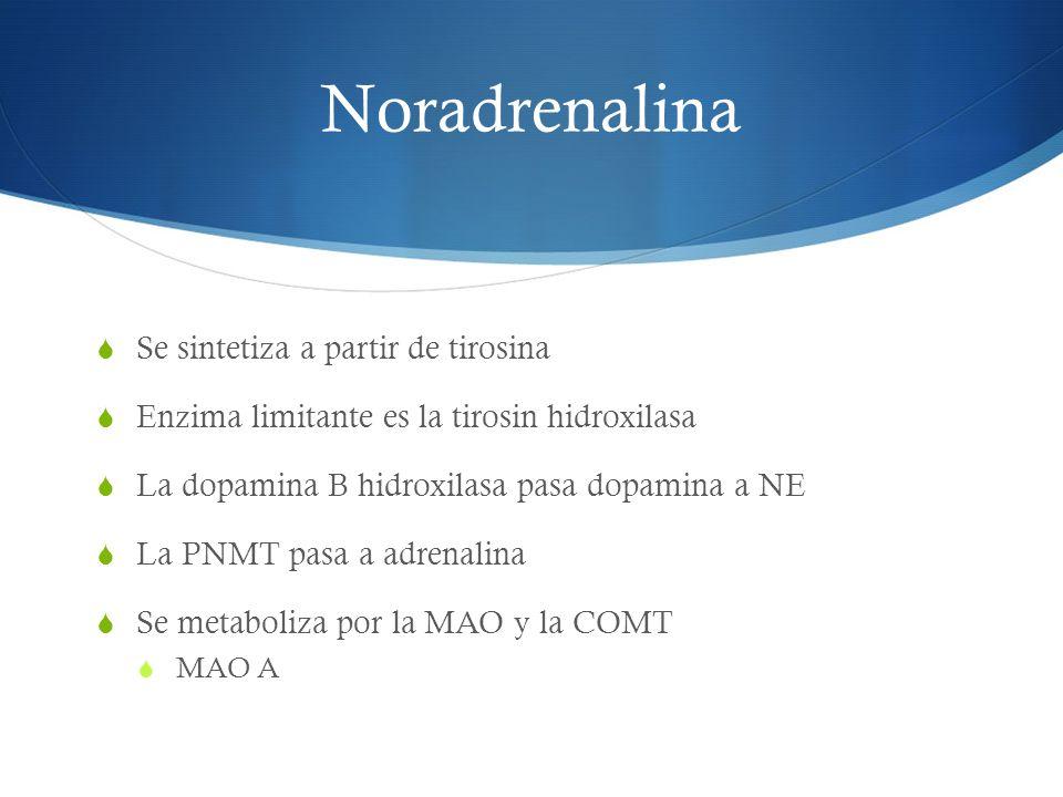 Noradrenalina Se sintetiza a partir de tirosina Enzima limitante es la tirosin hidroxilasa La dopamina B hidroxilasa pasa dopamina a NE La PNMT pasa a