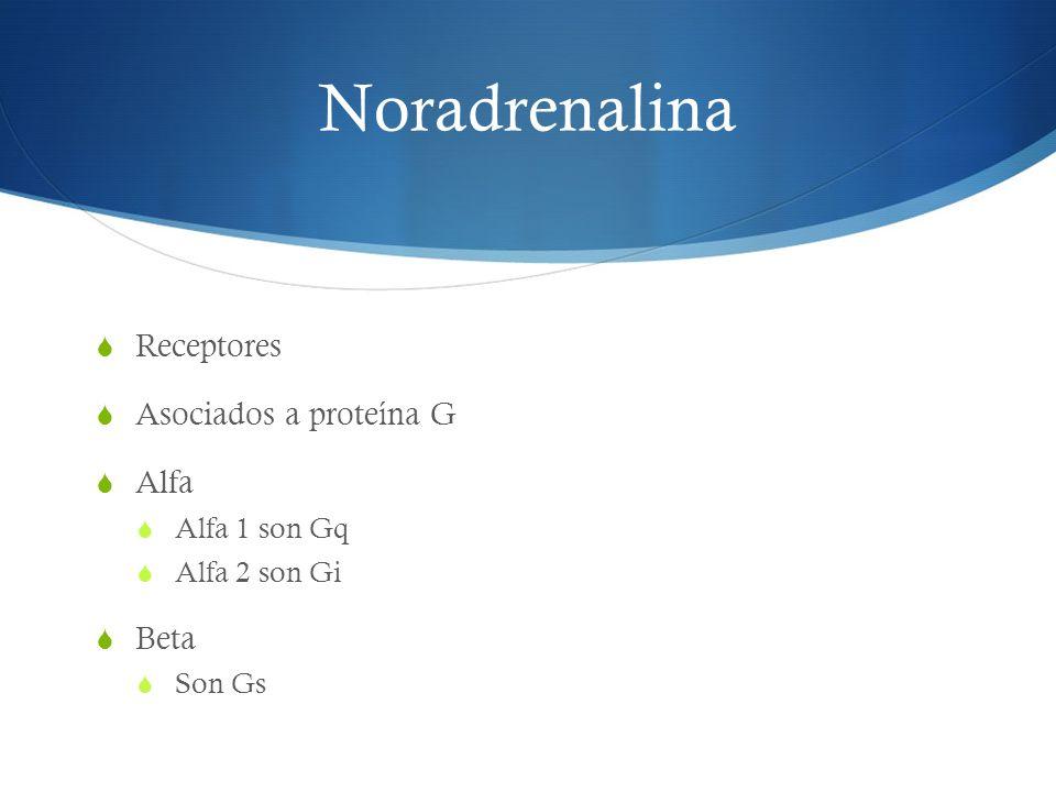 Noradrenalina Receptores Asociados a proteína G Alfa Alfa 1 son Gq Alfa 2 son Gi Beta Son Gs