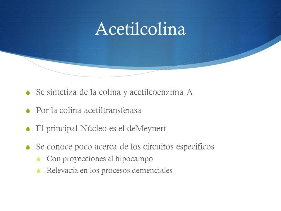Acetilcolina Se sintetiza de la colina y acetilcoenzima A Por la colina acetiltransferasa El principal Núcleo es el deMeynert Se conoce poco acerca de