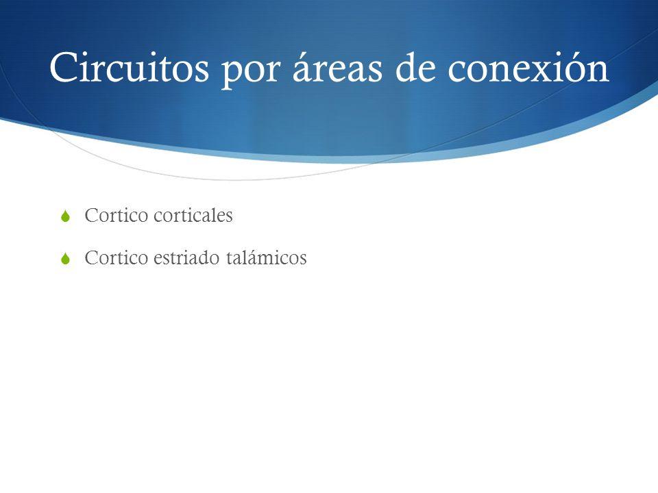 Circuitos por áreas de conexión Cortico corticales Cortico estriado talámicos
