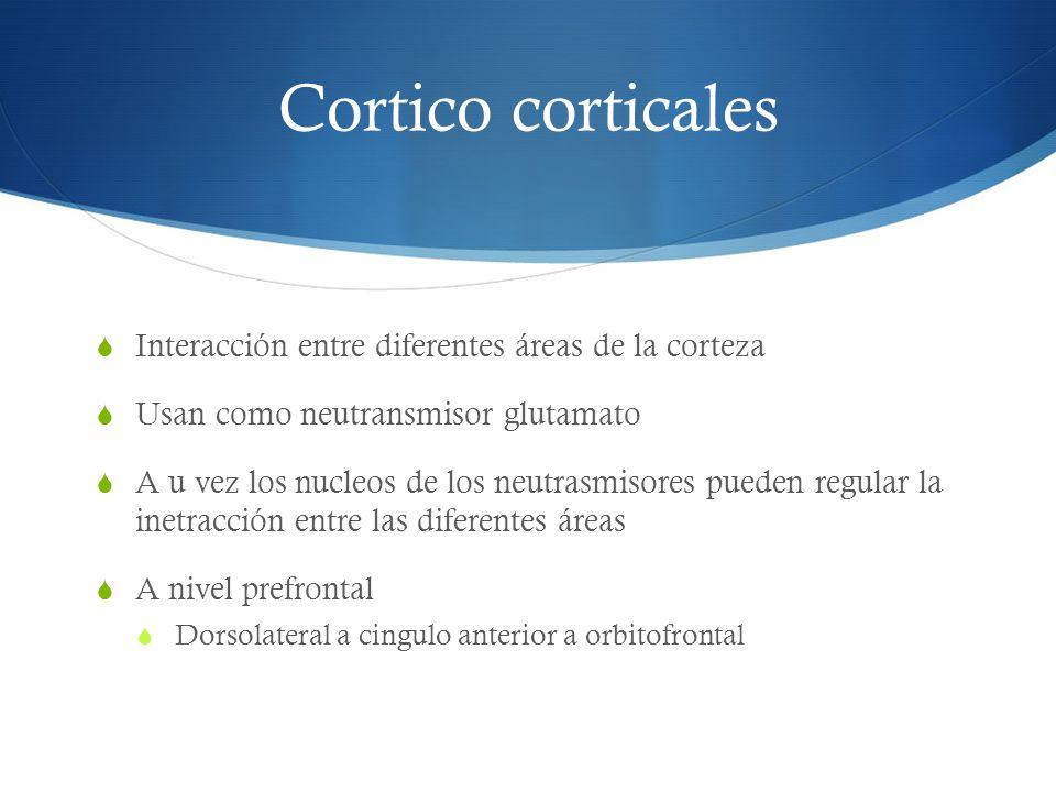 Cortico corticales Interacción entre diferentes áreas de la corteza Usan como neutransmisor glutamato A u vez los nucleos de los neutrasmisores pueden