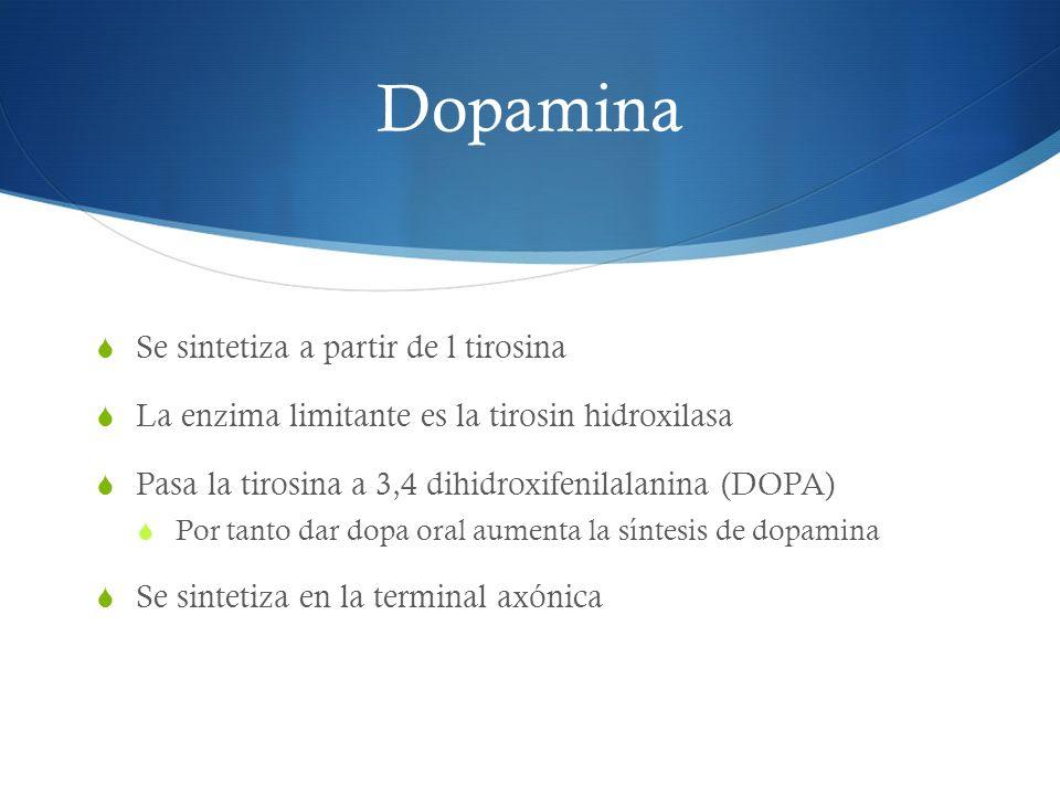 Dopamina Se sintetiza a partir de l tirosina La enzima limitante es la tirosin hidroxilasa Pasa la tirosina a 3,4 dihidroxifenilalanina (DOPA) Por tan