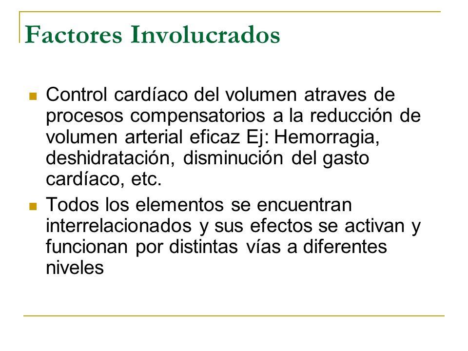 Factores Involucrados Control cardíaco del volumen atraves de procesos compensatorios a la reducción de volumen arterial eficaz Ej: Hemorragia, deshid