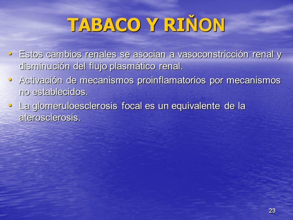 23 TABACO Y RI ŇON Estos cambios renales se asocian a vasoconstricción renal y disminución del flujo plasmático renal. Estos cambios renales se asocia