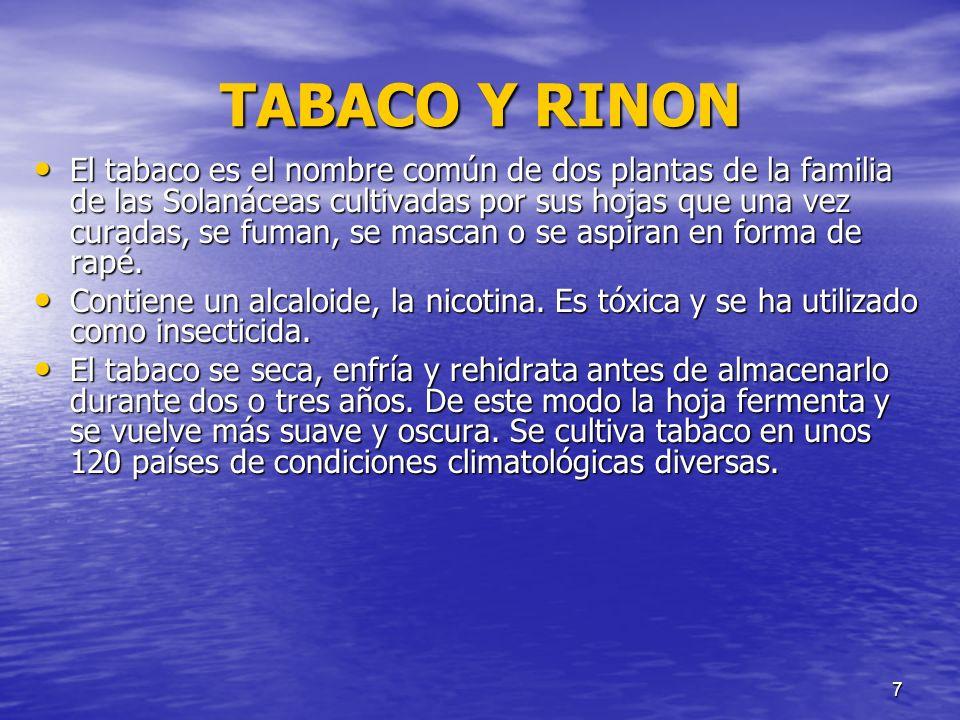 7 TABACO Y RINON El tabaco es el nombre común de dos plantas de la familia de las Solanáceas cultivadas por sus hojas que una vez curadas, se fuman, s