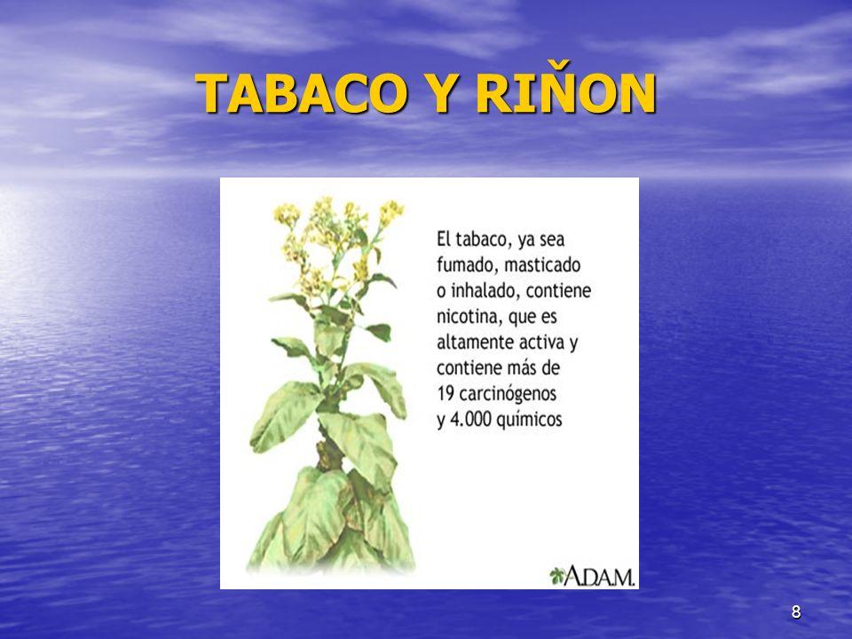 9 TABACO Y RINON Fue introducido en Portugal – España por Cristóbal Colón a fines del siglo XV (1498), luego penetró a Francia por Jean Nicot.