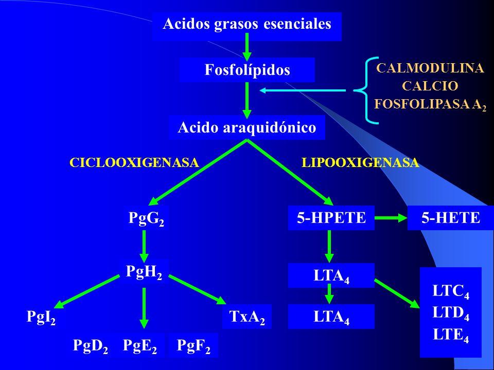 Acido araquidónico Acidos grasos esenciales Fosfolípidos LIPOOXIGENASACICLOOXIGENASA 5-HPETEPgG 2 PgH 2 PgF 2 PgE 2 PgD 2 PgI 2 TxA 2 LTC 4 LTD 4 LTE