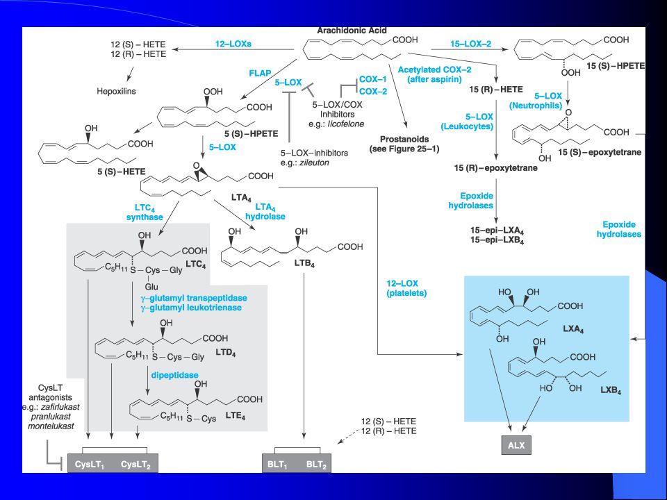 Prostaglandinas: Propiedades Tracto gastrointestinal: Músculo liso PgE 2 – PgF 2 Contraen LTContraen Secreción gástrica PgE 2 – PgI 2 Inhiben la secreción de ácido clorhídrico – Vasodilatación – Aumento del moco gástrico