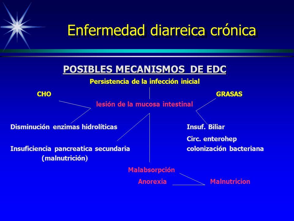 Enfermedad diarreica crónica POSIBLES MECANISMOS DE EDC Persistencia de la infección inicial CHOGRASAS lesión de la mucosa intestinal Disminución enzi