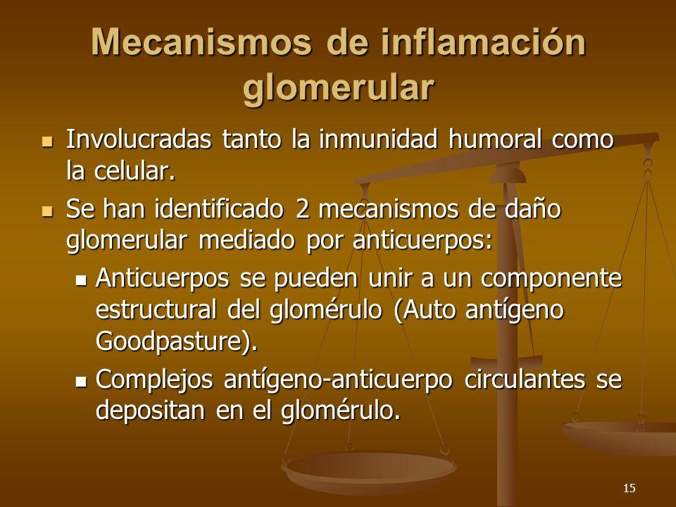 15 Mecanismos de inflamación glomerular Involucradas tanto la inmunidad humoral como la celular. Involucradas tanto la inmunidad humoral como la celul