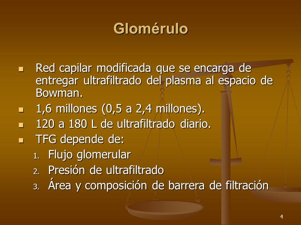 5 Barrera glomerular MBG Células endoteliales Células Epiteliales