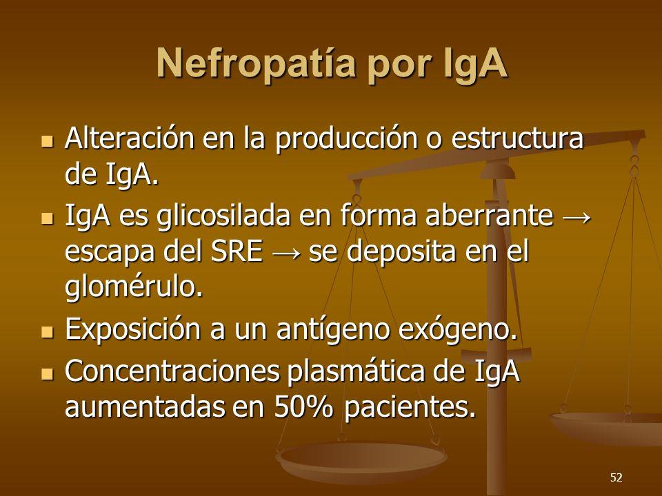 52 Nefropatía por IgA Alteración en la producción o estructura de IgA. Alteración en la producción o estructura de IgA. IgA es glicosilada en forma ab