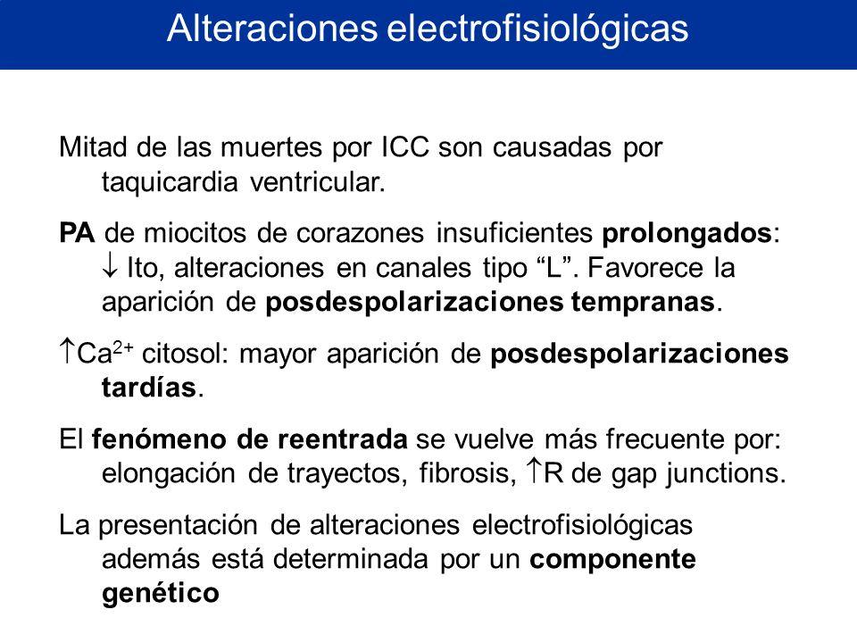 Alteraciones electrofisiológicas Mitad de las muertes por ICC son causadas por taquicardia ventricular. PA de miocitos de corazones insuficientes prol