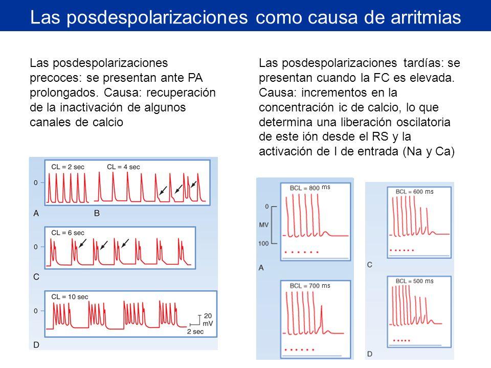 Las posdespolarizaciones como causa de arritmias Las posdespolarizaciones precoces: se presentan ante PA prolongados. Causa: recuperación de la inacti