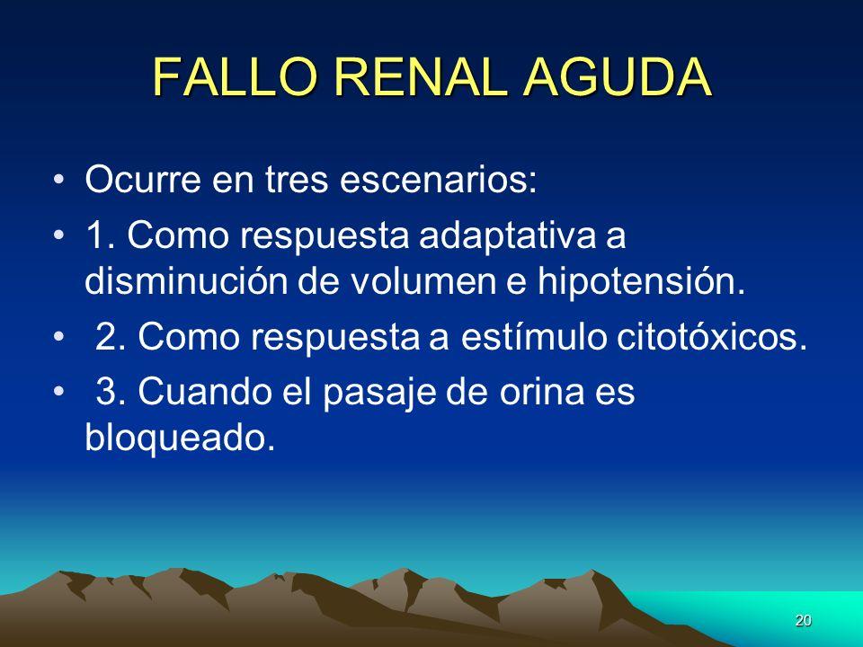 20 FALLO RENAL AGUDA Ocurre en tres escenarios: 1. Como respuesta adaptativa a disminución de volumen e hipotensión. 2. Como respuesta a estímulo cito