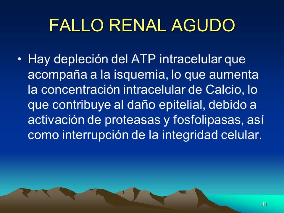 41 FALLO RENAL AGUDO Hay depleción del ATP intracelular que acompaña a la isquemia, lo que aumenta la concentración intracelular de Calcio, lo que con