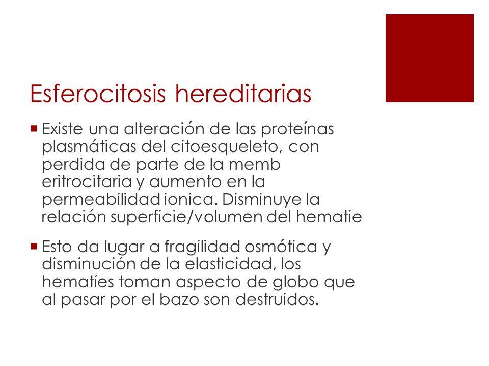 Esferocitosis hereditarias Existe una alteración de las proteínas plasmáticas del citoesqueleto, con perdida de parte de la memb eritrocitaria y aumen