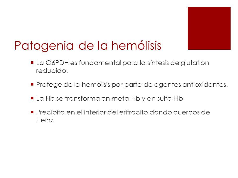 Patogenia de la hemólisis La G6PDH es fundamental para la síntesis de glutatión reducido. Protege de la hemólisis por parte de agentes antioxidantes.