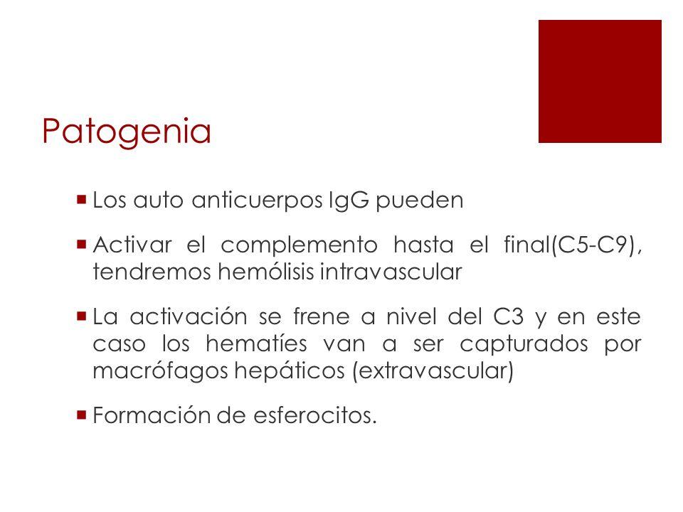 Patogenia Los auto anticuerpos IgG pueden Activar el complemento hasta el final(C5-C9), tendremos hemólisis intravascular La activación se frene a niv