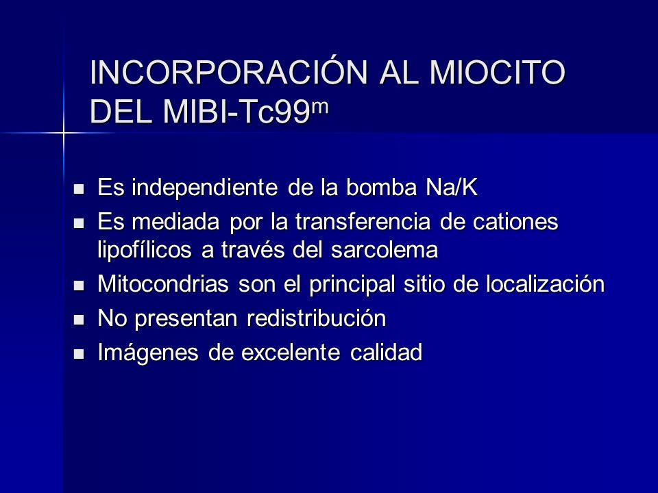 INCORPORACIÓN AL MIOCITO DEL MIBI-Tc99 m Es independiente de la bomba Na/K Es independiente de la bomba Na/K Es mediada por la transferencia de cation