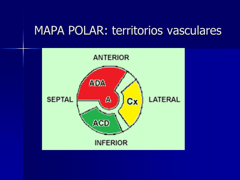 MAPA POLAR: territorios vasculares MAPA POLAR: territorios vasculares
